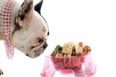 Assorted dog bowls