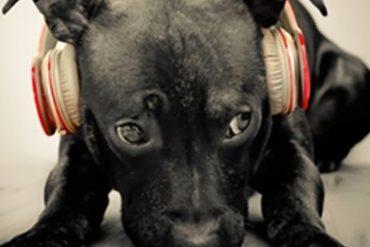 Cura de les oïdes del gos