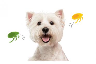 És segur que als gossos els agrada la música?